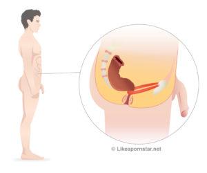 best beginner anal positions